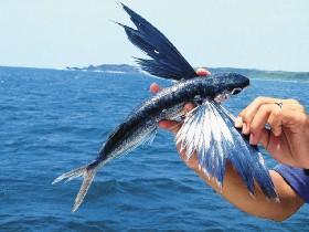 飛魚季蘭嶼高潮戲假日一房難求